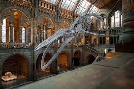 Natural History Museum - Place to visit using London Coach Tours